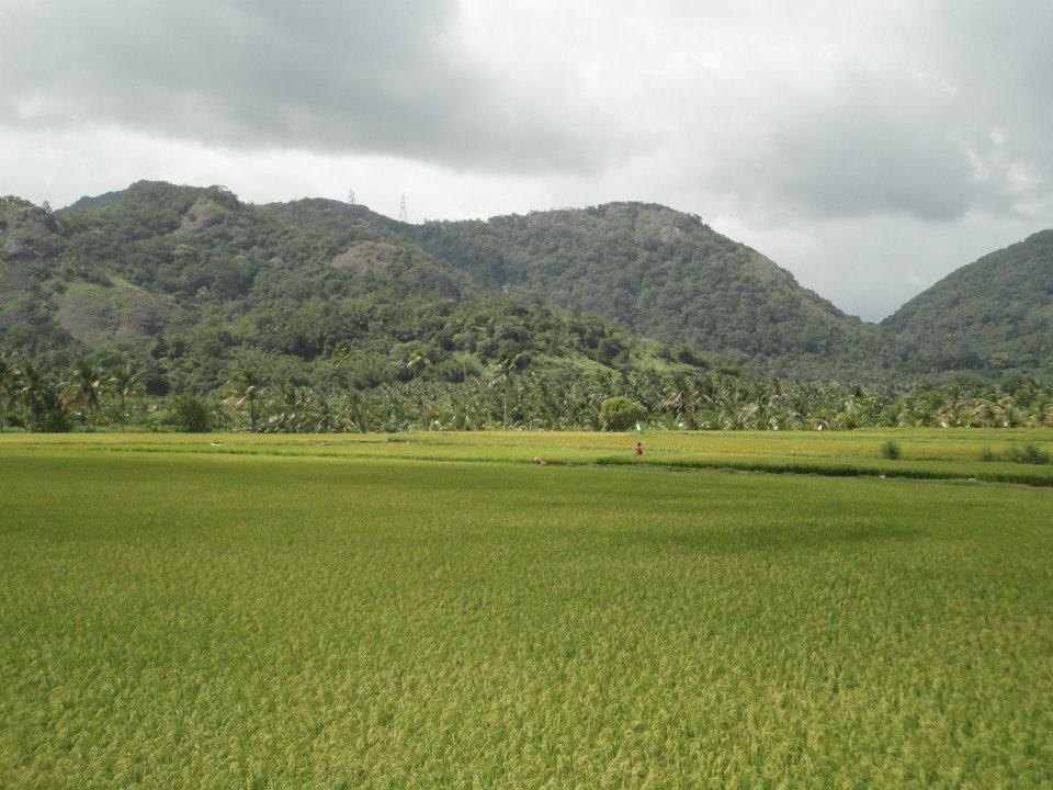 Inde du sud à vélo