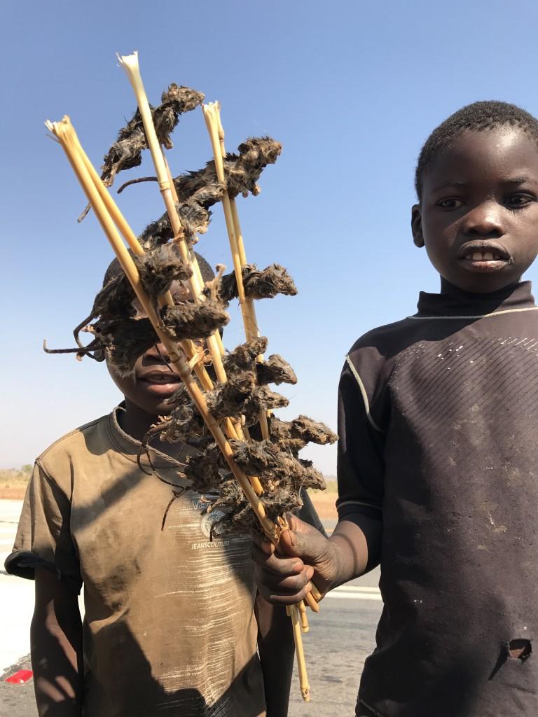 Brochette de souris Zambie