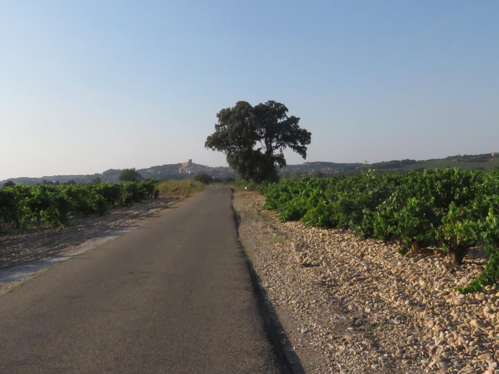 Châteauneuf-du-Pape à vélo