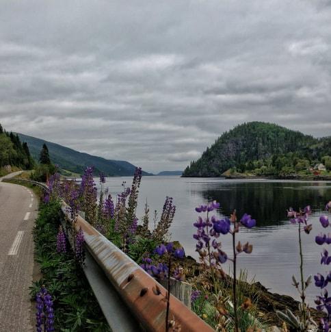 Le long des fjords norvégiens